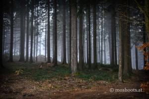 GIS - Wald mit Schatten