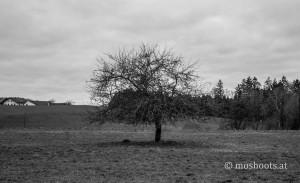 Sankt Roman - alleinstehender Baum