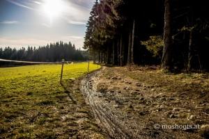 Lichtenberg - Weg zur Gisela Warte