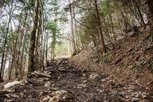 Schoberstein - im Wald 1
