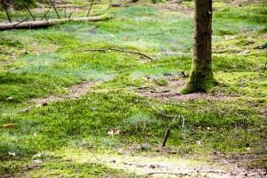 Der grüne Waldboden