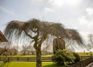 Baum mit eigenem Dach
