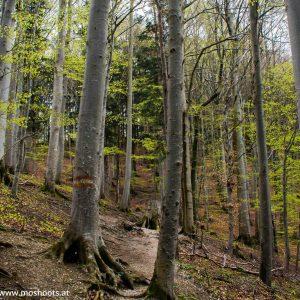 Waldwanderung auf den Grünberg