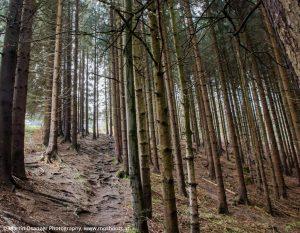 Pfad durch den Wald am Waldrand