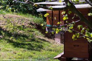 Bienenschwarm im Fokus