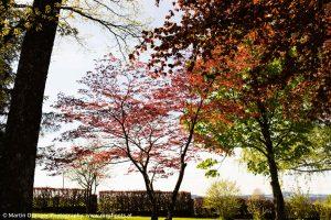 Wunderschön blühende Bäume in den Gärten
