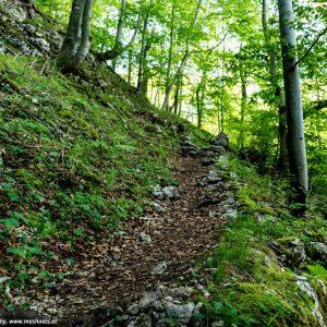 Beginn des Waldwanderweges