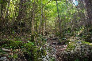 Waldweg auf den Erlakogel im ersten Teil