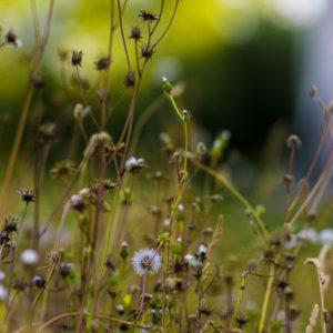Wilde Pflanzen