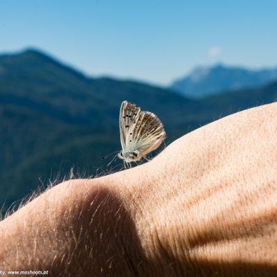 Schmetterling am Gipfelkreuz