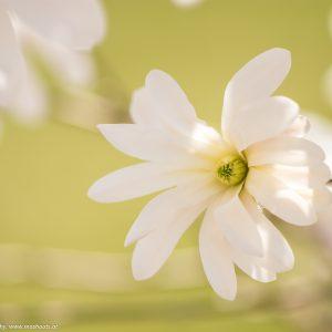 Blüten eines Strauches