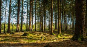 Wanderweg durch den Wald im Frühling in Sankt Roman