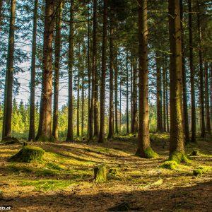 Wanderweg durch den Wald Sankt Romans