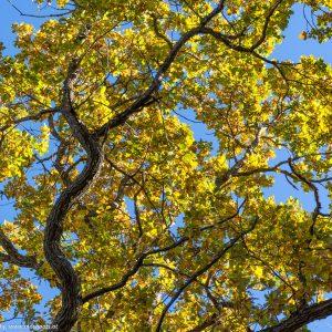 Vielfalt des Herbstes
