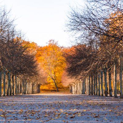 Allee im Garten des Schlosses Drottningholm