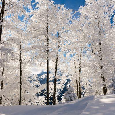 Winterlandschaft in Puchenstuben